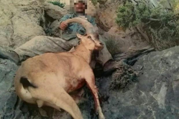 شکارچی غیر مجاز در فیروزکوه دستگیرشد