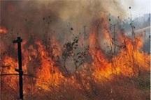 42هکتار از اراضی ملی فارس در آتش سوخت
