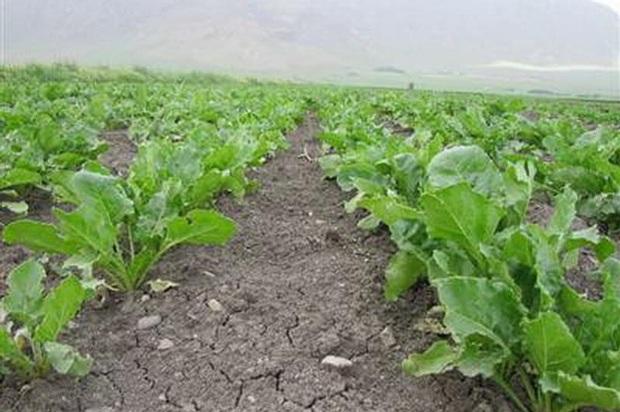بهره گیری از مسائل علمی مخاطرات کشاورزی را کاهش می دهد