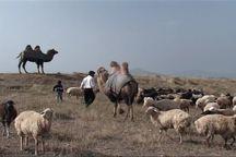 کوچ پاییزه عشایر استان اردبیل آغاز شد