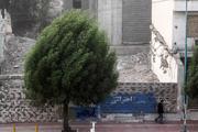 شکسته شدن شاخه برخی درختان بر اثر باد شدید در قزوین