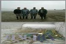 جمع آوری تور های غیرمجاز ماهیگیری در رودخانه های نور و محمودآباد  ممنوعیت صیدماهی در مازندران