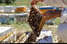 خشکسالی 30 درصد تولید عسل خراسان شمالی را کاهش داد