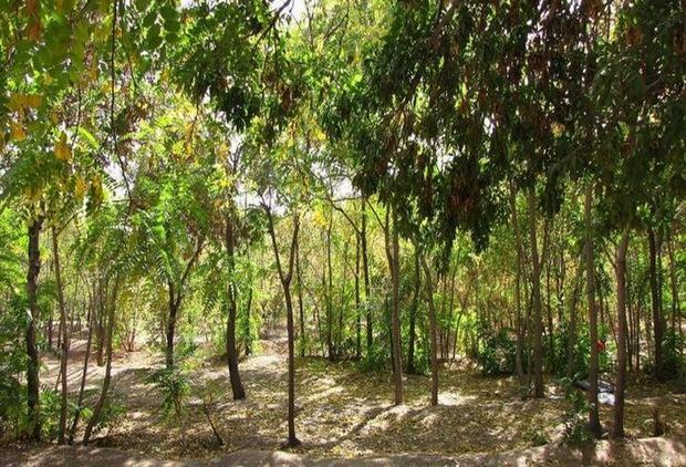 پارک جنگلی سرخه حصار به شهرداری تهران واگذار می شود