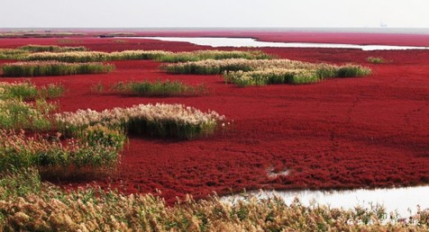 سرزمین علفهای سرخ