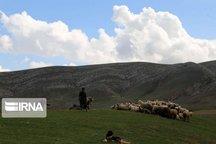 سمنان از لحاظ سرانه دام عشایر در کشور اول است