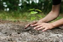 کاشت درخت ،  گام برداشتن در مسیر آشتی با طبیعت