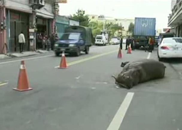 فیلم /  چین؛تلاش ناکام اسب آبی برای فرار