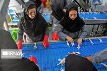 ۱۸.۵ میلیون دلار فرآورده خام دامی از اصفهان صادر شد