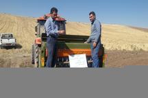 اختصاص بیش از 12 هزار هکتار از اراضی خلخال به کشت گندم پائیزه