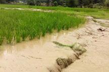 خسارت سیل به کشاورزی قزوین به تفکیک هر بخش تعیین شد