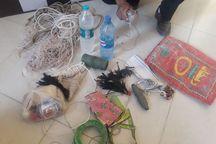 صیاد متخلف بازهای شکاری در دامغان دستگیر شد