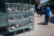 عملیات انتقال بازار پرندگان استان قزوین موفق نبوده است