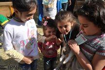 کارگاه آموزشی شهر دوستدار کودک در بوشهر گشایش یافت