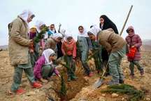 اجرای طرح هر خانوار یک نهال در یاسوج آغاز شد