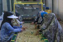 پرداخت ۳۵۲ میلیارد تومان تسهیلات اشتغال پایدار روستایی در فارس