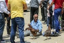 عرضه حیوانات زنده در بازار کارگزاری بندرعباس مخاطره آمیز است
