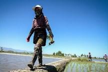 ورود بانوان مازندرانی به عرصه تولیدات سالم کشاورزی