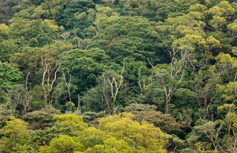 هنوز به نجات جنگلها امیدواریم!