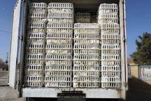 ۱۱ تن مرغ قاچاق در آبدانان و چرداولکشف شد