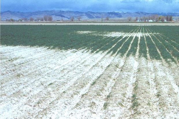 محلول ضد شوری اراضی کشاورزی در استان مرکزی ساخته شد