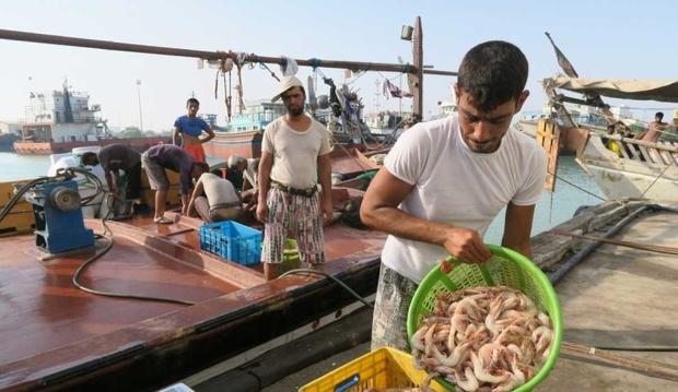 صید میگو در بوشهر کاهش یافت