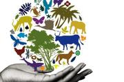 15 گونه جانوری استان مرکزی در معرض آسیب و انقراض است