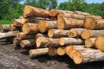 کشف 15تن چوب جنگلی قاچاق در لاهیجان