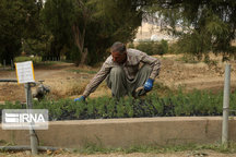 طرح نهضت سبز نهالکاری در ۲۱۰ هکتار از اراضی اردبیل اجرا میشود