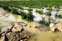 بارندگی 15 میلیارد ریال به زمین های زراعی میناب خسارت زد