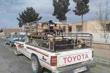 ۱۲۶ دستگاه خودروی حامل دام غیرمجاز در خراسان شمالی توقیف شد