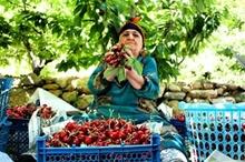 جذب بازار اولویت تشکل های بخش کشاورزی کردستان