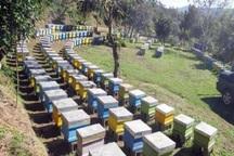 سرشماری زنبورستان های اردبیل آغاز شد