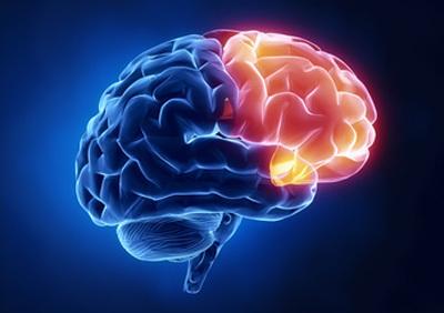 تفاوت سیمکشی مغز زنان و مردان در بیان احساسات