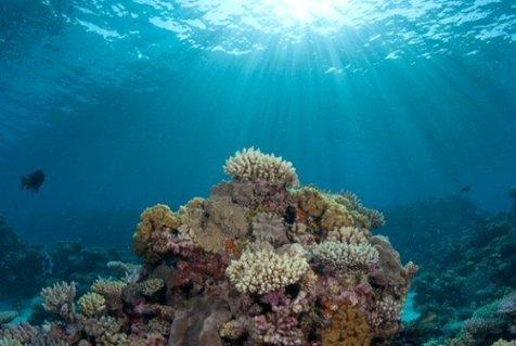 چربی عامل بقای مرجان ها در مقابل تغییرات اقلیمی