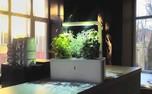 گیاهان خطرناک برای نگهداری در خانه