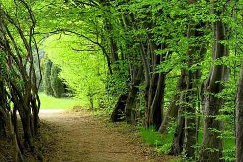 زیباترین جنگل های دنیا + عکس