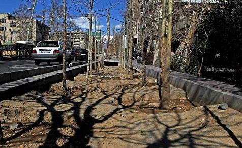 تکمیل روند کاشت درختان چنار در خیابان ولی عصر(عج)