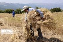 تحقق ۴۹ درصدی تعهدات کشاورزی همدان در سند توسعه