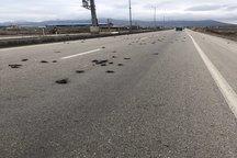 علت مرگ دسته جمعی پرندگان در محور ماکو به بازرگان مشخص شد