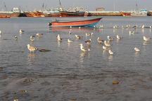 مهاجرت پرندگان زمستان گذران به سیستان و بلوچستان آغاز شد