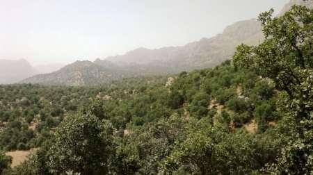 28 هکتار از اراضی شهرستان دورود جنگلکاری شد