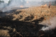جریمه و حبس برای آتش زدن بقایای برنج در شالیزارها