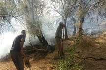 مهار آتش سوزی در جنگل کرخه  آتش به 30 هکتار جنگل خسارت زد