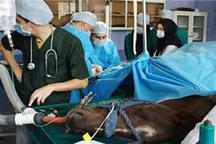 25 نفر در بیمارستان دامپزشکی آبیک فعالیت می کنند