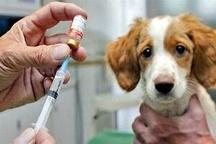 واکسینه شدن سگ ها درشهرستان امیدیه علیه هاری