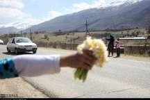گل نرگس هدیه کودکان اورامی به مسافران