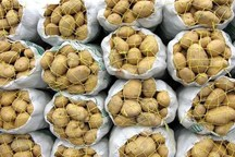 ۳۵ درصد محصول سیبزمینی اردبیل به فراوردههای خوراکی تبدیل میشود