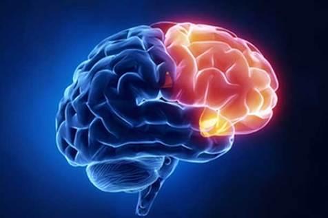 مغز در خواب راه می رود!