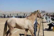 دومین جشنواره اسب در شاهرود برگزار شد